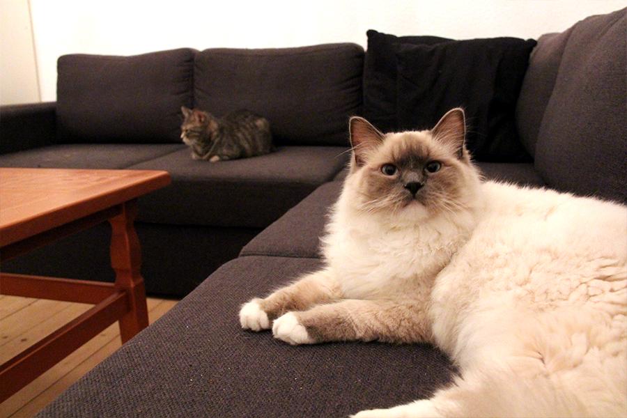 katte_ballede_hjemme2