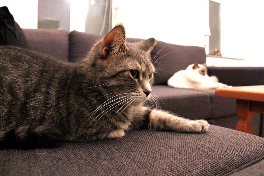katte_ballede_hjemme3