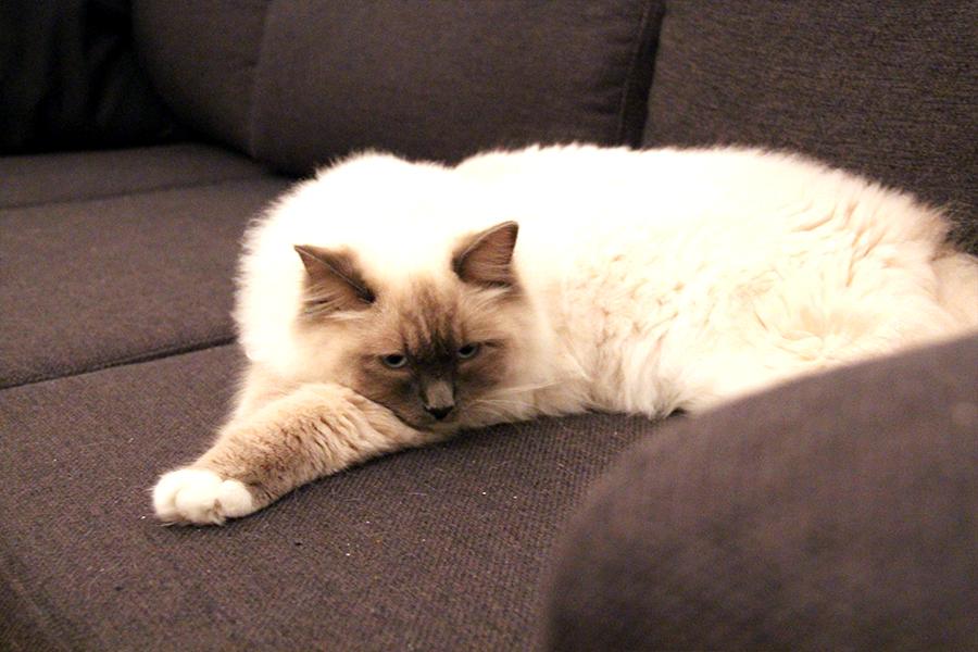 katte_ballede_hjemme5