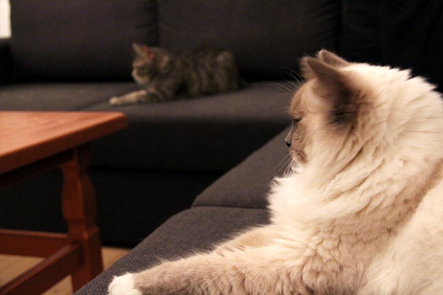 katte_ballede_hjemme6