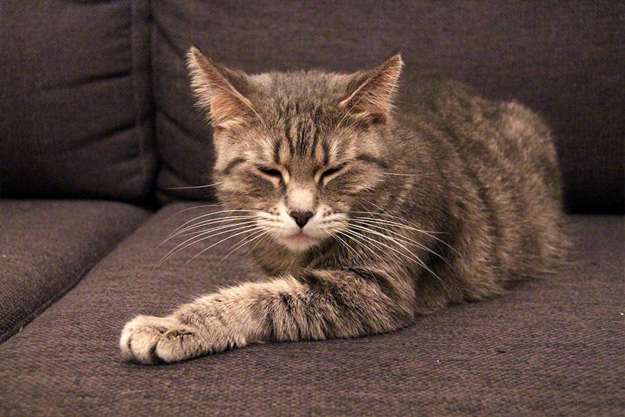 katte_ballede_hjemme7